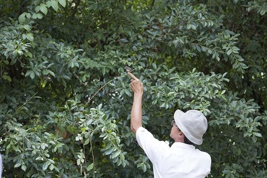 Khi con chim non chui vào đám lá ẩn nấp, người đàn ông này đã bắt ra ngoài để chụp cho dễ Ảnh: Minh Khanh