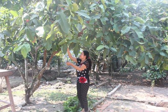 Bà Nguyễn Thị Cúc bên vườn cây ăn trái của mình
