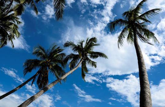 Đi Tam Hải uống dừa xiêm, ngắm người đẹp và thả hồn với biển
