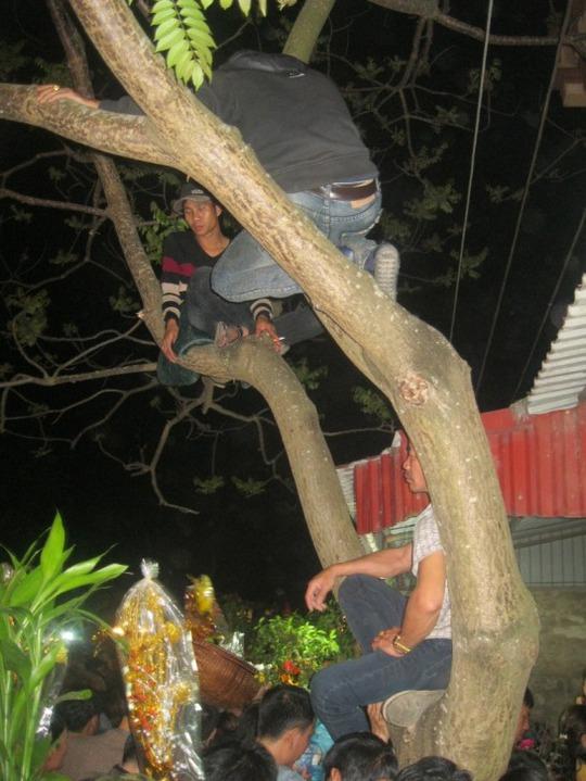 Cành cây cũng là nơi lý tưởng để dừng chân