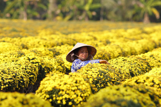 Rực rỡ làng hoa Sa Đéc vào Xuân