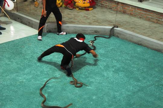 Rợn người xiếc rắn nghệ thuật ở Nha Trang
