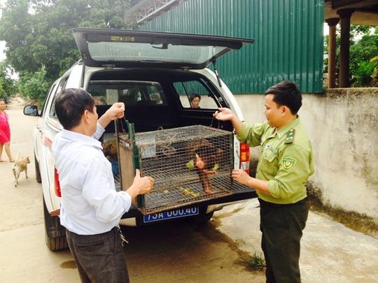 Bàn giao cá thể Khỉ mặt đỏ cho các cơ quan chức năng để kịp thời bảo tồn - ảnh do VQG Phong Nha – Kẻ Bàng cung cấp