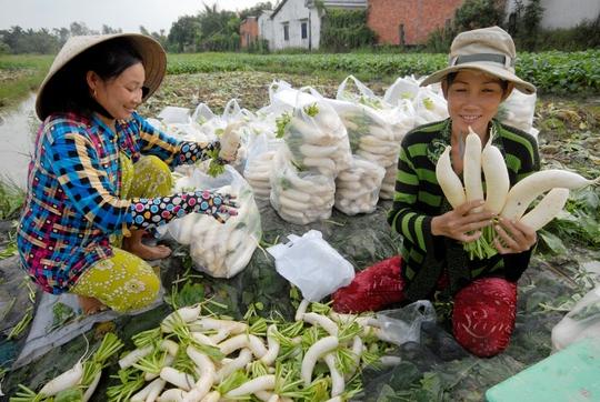 Nhờ mua bán nhộn nhịp nên người dân Việt trồng các loại rau, củ quả ở gần khu vực biên giới rất phấn khởi vì có đầu ra luôn ổn định. Vì vậy, mấy năm nay diện tích đất trồng màu ở khu vực này tăng lên đáng kể. Thu nhập của người dân cũng khấm khá hơn.