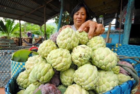 Mãng cầu được xem là trái cây sạch ở vùng núi, được tiêu thụ mạnh trong nước và xuất khẩu sang Campuchia