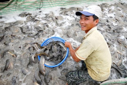 Ngoài các mặt hàng rau củ quả thì các loài cá như lóc, trê, cá rô, mè vinh, tai tượng… mỗi ngày xuất qua Campuchia vài chục tấn.