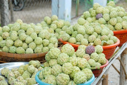Mãng cầu trồng ở vùng Bảy Núi tuy trái không to, không đẹp nhưng lại rất thơm ngọt vì không sử dụng phân thuốc