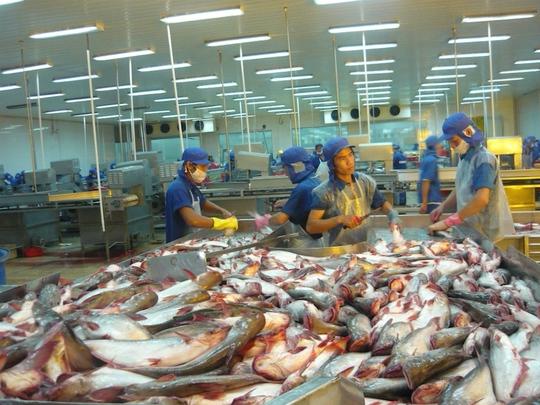 Chế biến cá tra tại Bianfishco
