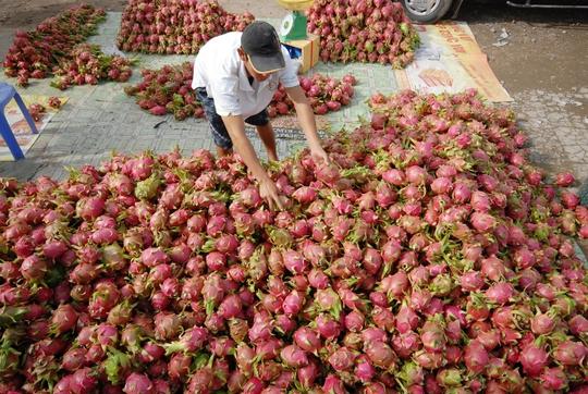 Nhờ có mối lái làm ăn thân quen xuất hàng qua Campuchia nên việc buôn bán rất thuận lợi, thậm chí không đủ hàng để giao. Vì vậy, mỗi năm cơ sở chị đem lại nguồn doanh thu hàng chục tỉ đồng.