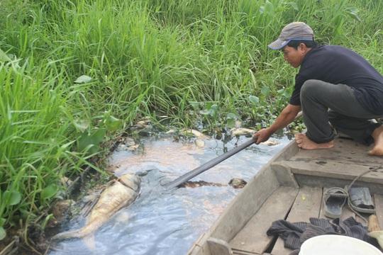 Người dân địa phương vớt được khoảng 1,5 tấn cá trong 3 ngày