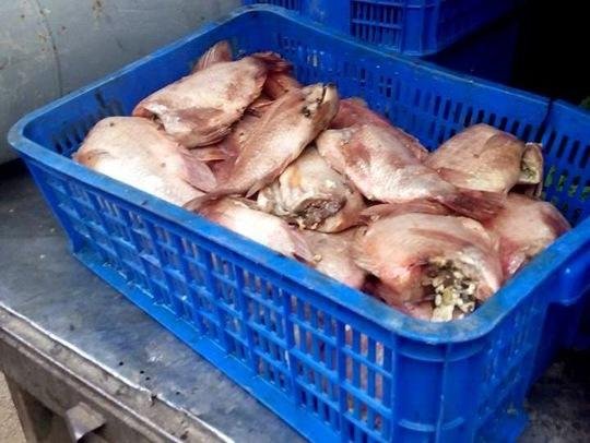 Cá điêu hồng thối bị phát hiện đưa vào Trường Tiểu học Long Bình. (Ảnh do phụ huynh cung cấp)