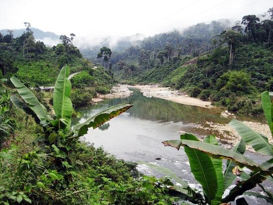 Tỉnh Quảng Nam đang xem xét chấm dứt cho doanh nghiệp Trung Quốc thuê đất trồng rừng (Ảnh minh họa)
