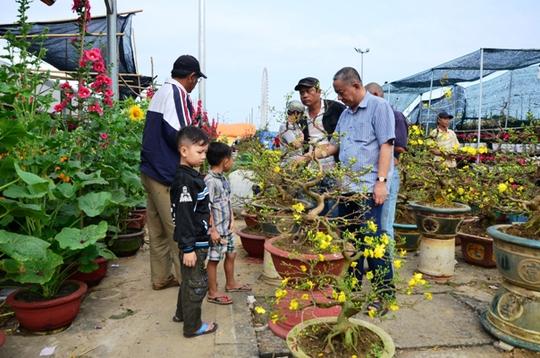 Khách chọn mua mai tại chợ hoa Đà Nẵng chiều 29 Tết