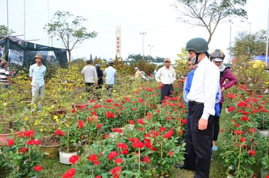 Hoa hồng cũng được nhiều người ưa chuộng với giá khá mềm từ 100 ngàn/ 1 chậu