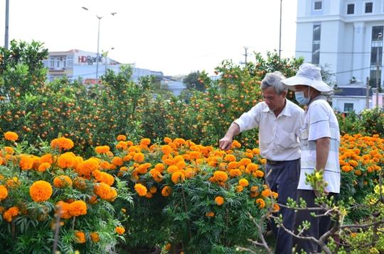 Hoa vạn thọ giá 350 ngàn đồng/ 1 cặp