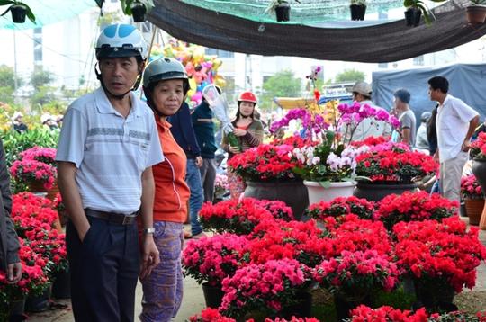 Hoa đỗ quyên hút khách