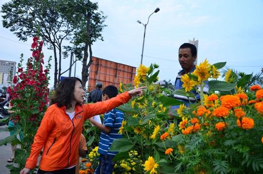 Chọn mua hoa hướng dương