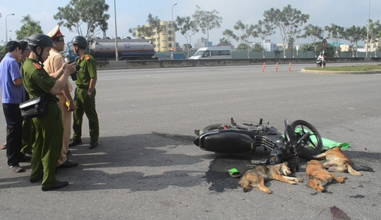 Hai thanh niên bị tai nạn chở theo 3 con chó bị đánh bả cùng nhiều bả chó