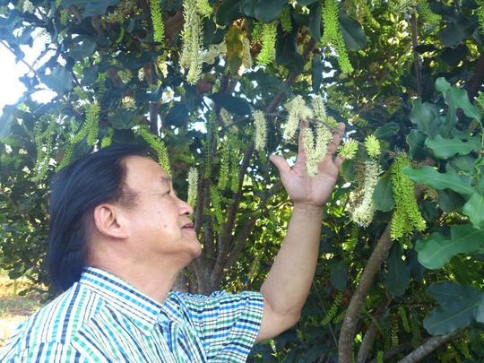 GS Nguyễn Lân Hùng tham quan một vườn cây mắc ca ở tỉnh Đắk Lắk