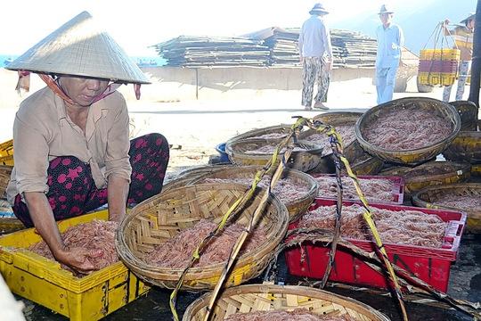Ruốc biển chất đầy nia chuẩn bị mang ra các chợ bán