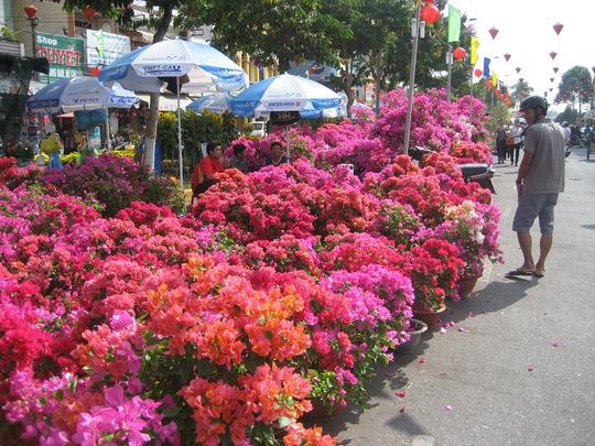 Bông giấy khoe đủ màu sắc tại chơ hoa gần Bến Ninh Kiều, TP Cần Thơ