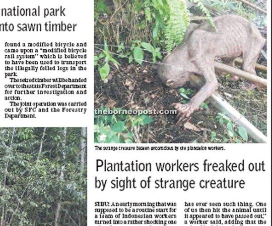 Các công nhân đã hoảng hốt khi phát hiện sinh vật kỳ lạ. Ảnh: Borneo Post