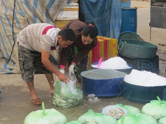 Thu mua cá nục tại bến cá Mỹ Á, xã Phổ Quang