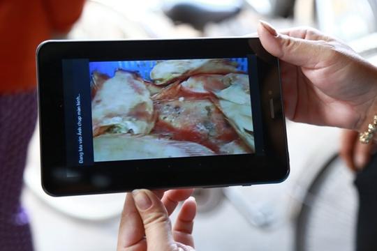 Hình ảnh cá diêu hồng mục thối bị phụ huynh ghi hình