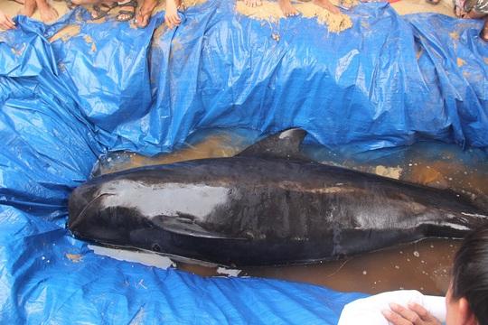 Theo người dân, trọng lượng cá voi khoảng chừng 300 kg Ảnh: CTV
