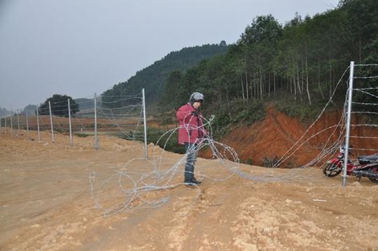 Hàng rào thép gai bị người dân phá dỡ lấy lối đi.