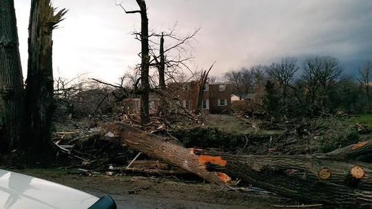 Nhiều cây cối gãy đổ do cơn bão gây ra. Ảnh: CNN