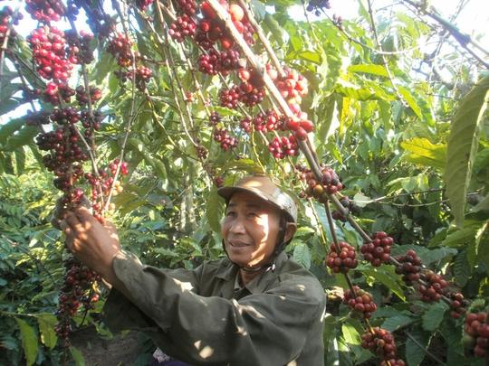Hiệp định Thương mại tự do giữa Việt Nam và Liên minh kinh tế Á - Âu được ký kết sẽ tạo điều kiện thuận lợi cho xuất khẩu mặt hàng cà phê Việt Nam Ảnh: Cao Nguyên