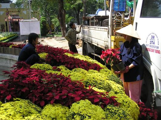 Công nhân bắt đầu sắp xếp hoa nền trong công viên Tao Đàn