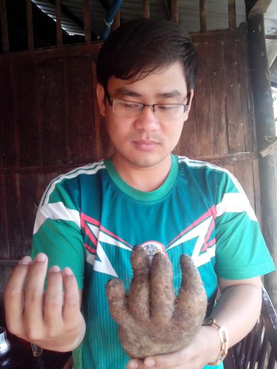 Củ khoai có hình dáng hệt bàn tay người
