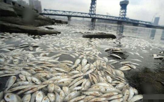 Cá chết nổi trắng hồ nước gần tâm vụ nổ Thiên Tân