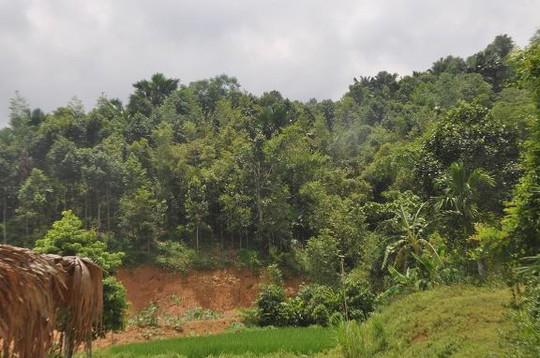 Khu vực đồi cây rậm rạp tại thôn 2, xã Khánh Hòa, huyện Lục Yên (tỉnh Yên Bái), nơi bắt được 2 đối tượng lẩn trốn