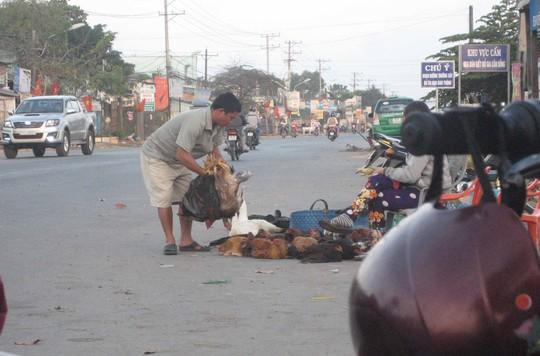 Gà được bày bán ngay phía trước biển cấm mua bán, giết mổ gia cầm sống