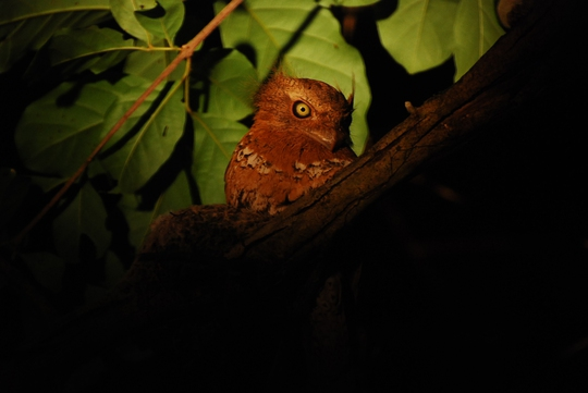 Các loài chim thú lạ sẽ hấp dẫn du khách (ảnh Vườn Cát Tiên)
