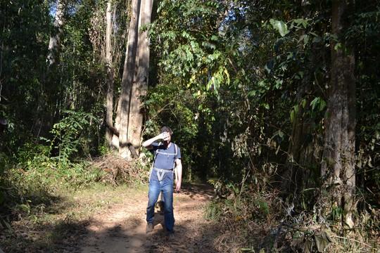 Cánh rừng nguyên sinh này cũng thường xuyên đoán các khách Tây dạo bước