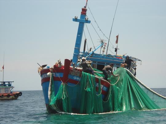 Ngư dân Lý Sơn trúng đậm mực núc