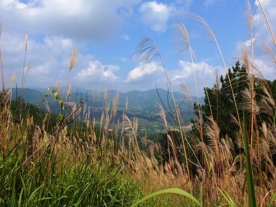 Rừng cỏ lao trên đường lên đỉnh Bidoup