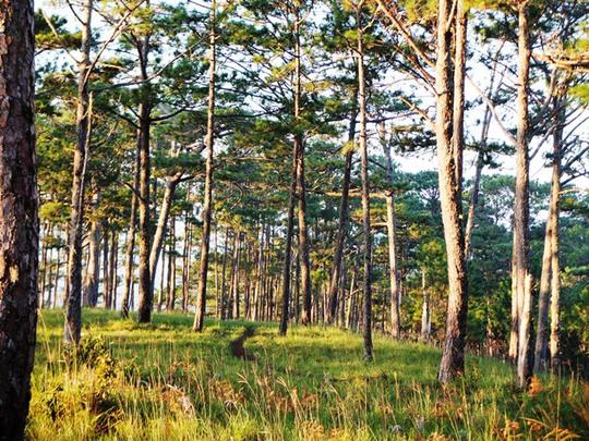 Sáng rừng