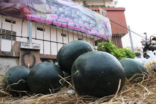 Các bạn tình nguyện viên lên kế hoạch tiếp tục cứu lỗ dưa cho người dân Quảng Nam