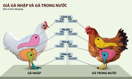 Giá gà nhập và gà trong nước - Đồ họa: Tấn Đạt