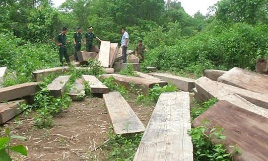 Phát hiện bãi gỗ lậu sát biên giới Việt – Lào