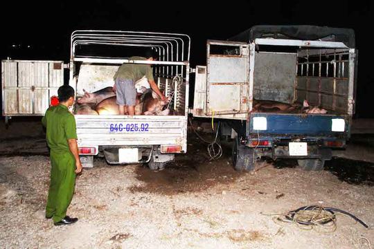 Hai xe chở heo đã bị bơm nước bị bắt quả tang