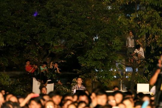 Một số trèo lên cây cho dễ nhìn
