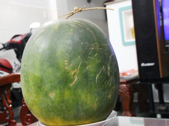 Dù để thời gian dài nhưng quả dưa này vỏ vẫn xanh, cứng.
