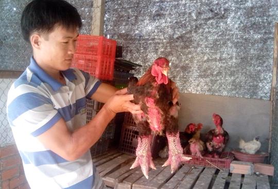 """Anh Trần Văn Toản bên con gà """"chân khủng"""" nuôi tại Cần Thơ."""