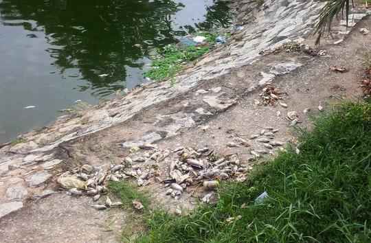 Cá chết được vớt lên bờ nhưng không được thu gom gây ô nhiễm khiến người dân bức xúc